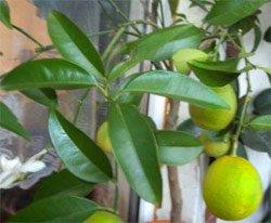 Славянск - apelsin.jpg
