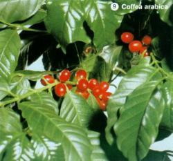 Славянск - coffea.jpg