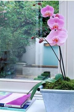Славянск - орхидея