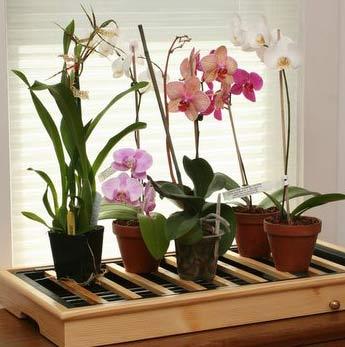 Славянск - орхидеи