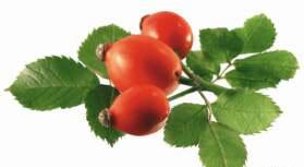 Славянск - шиповник, лекарственные растения